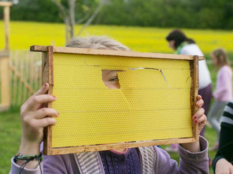 Neues zur Honig-Tour